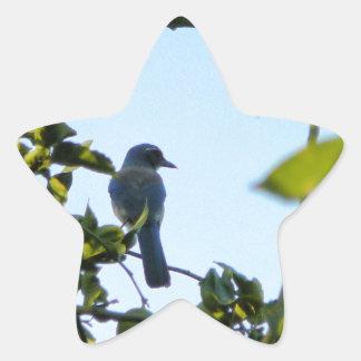 Beautiful Blue Jay Bird Star Sticker