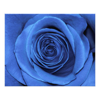 Beautiful Blue Rose Flower Floral Photo