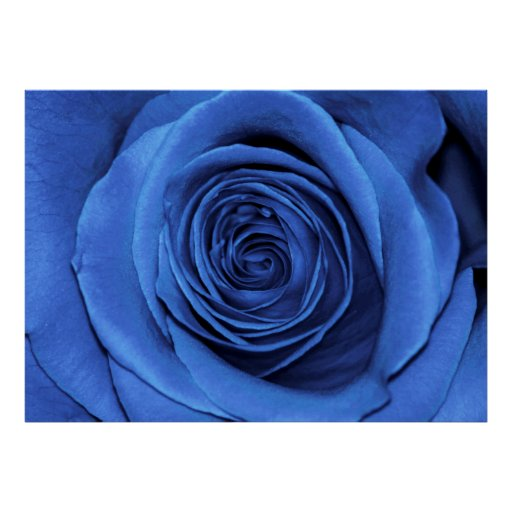 Beautiful Blue Rose Flower Floral Photo Poster