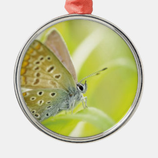 Beautiful Blue Spotted Butterfly Christmas Ornament