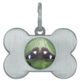 Beautiful Blue Spotted Butterfly Pet Tag