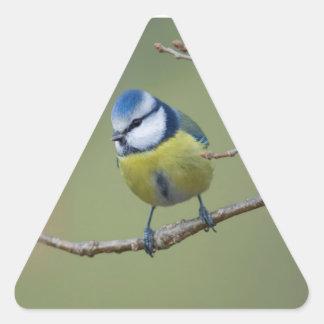 beautiful blue tit sitting on branch triangle sticker