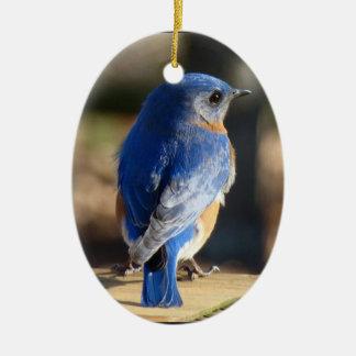 Beautiful Bluebird Ceramic Oval Decoration