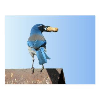 Beautiful Bluebird Post Cards