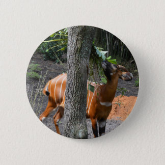 Beautiful Bongo 6 Cm Round Badge