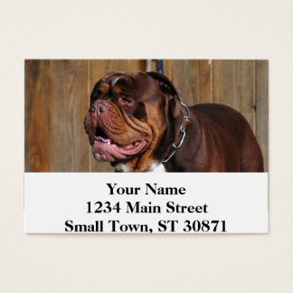 beautiful breed dog renascence bulldog business card