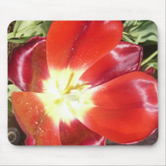 Beautiful Bright Orange Red Flowers Mousepad