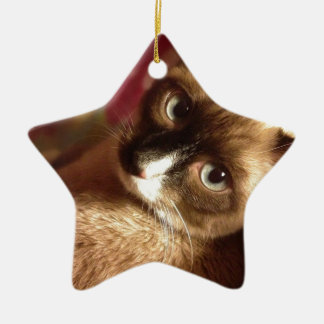 Beautiful Brown Cat Ceramic Star Decoration