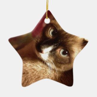Beautiful Brown Cat Christmas Ornament