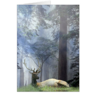 Beautiful Bull Elk in the Forest Season's Greeting Card
