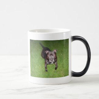Beautiful bull-terrier magic mug