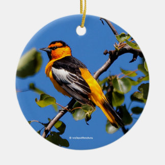 Beautiful Bullock's Oriole the Pear Tree Round Ceramic Decoration