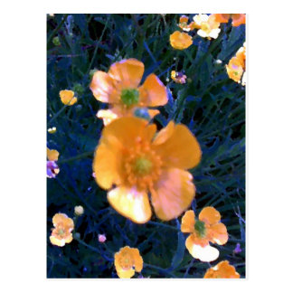 Beautiful Buttercups Postcard