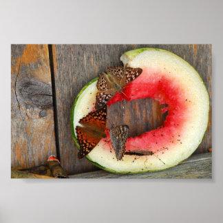 Beautiful Butterflies on Watermelon Poster