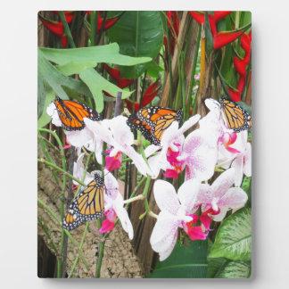 Beautiful Butterflies Plaque
