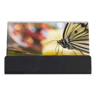 Beautiful Butterfly on a Dish Desk Business Card Holder