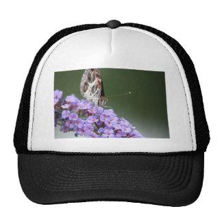 Beautiful Butterfly on butterfly bush Hat