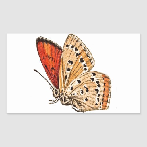 Beautiful Butterfly Rectangle Stickers