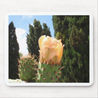 Beautiful Cactus Flower Mouse Pads