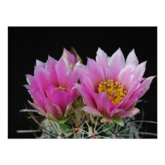 Beautiful Cactus Flower Poster