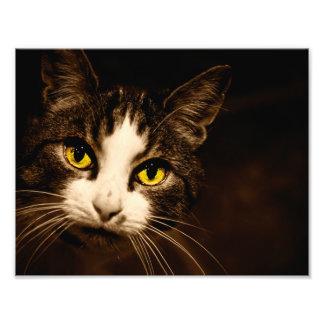 Beautiful Cat Eyes Photo Print