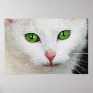 BEAUTIFUL CAT POSTERS