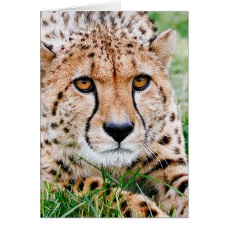 Beautiful Cheetah Greeting Card