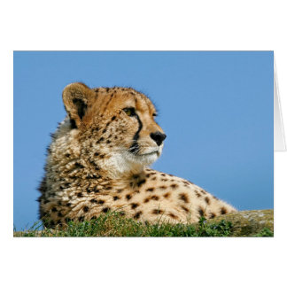 Beautiful Cheetah - Greeting Card. Card