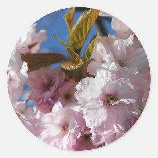 Beautiful cherry blossom classic round sticker