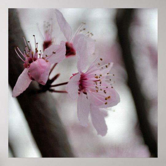 Beautiful Cherry Blossom Flowers Poster
