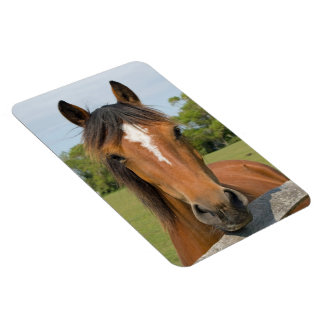Beautiful chestnut horse head portrait magnet