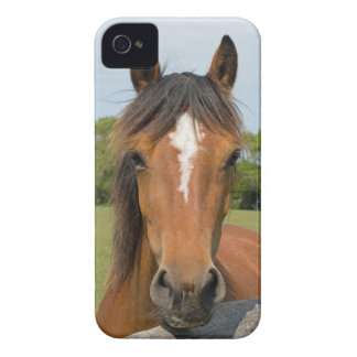 Beautiful chestnut horse photo blackberry bold cas iPhone 4 cover