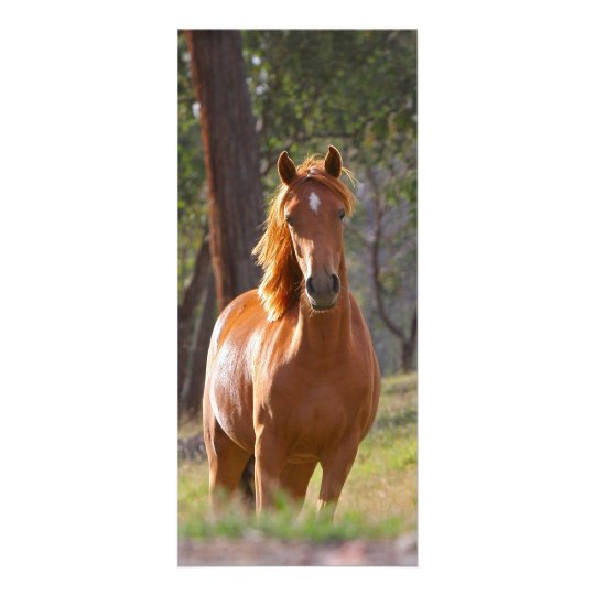 Beautiful chestnut horse photo bookmark custom personalized rack