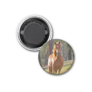 Beautiful chestnut horse photo portrait, gift 3 cm round magnet