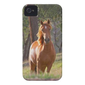 Beautiful chestnut horse photo portrait, gift Case-Mate iPhone 4 case