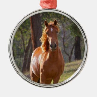 Beautiful chestnut horse photo portrait, gift Silver-Colored round decoration