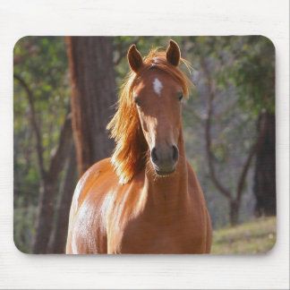 Beautiful chestnut horse photo portrait, gift mouse pad