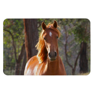 Beautiful chestnut horse photo portrait, gift rectangular magnets