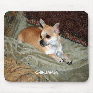 Beautiful Chihuahua Pup resting Mouse Pad