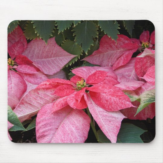 Beautiful Christmas Poinsettia Photo Mouse Mat