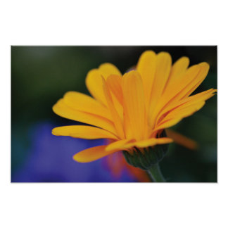 Beautiful close-up flower photo poster