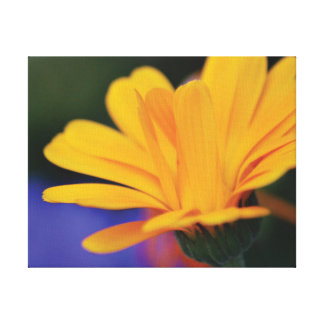 Beautiful close-up photo orange flower petals canvas print
