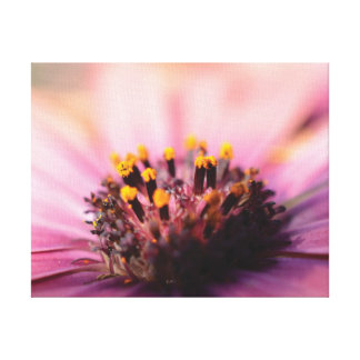 Beautiful close-up photo pink and yellow flower canvas print