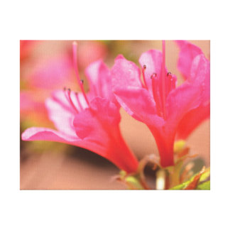 Beautiful close-up photo pink flowers canvas print