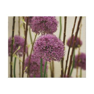 Beautiful close-up photo purple allium flowers canvas print