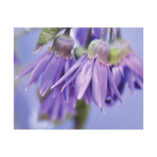 Beautiful close-up photo purple flower on blue canvas