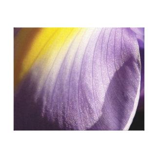 Beautiful close-up photo purple & yellow petal canvas print