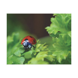 Beautiful close-up photo red ladybird canvas print