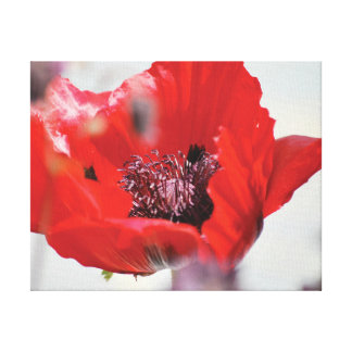 Beautiful close-up photo red poppy centre canvas print