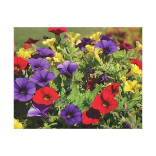 Beautiful close-up photo red purple yellow flowers canvas